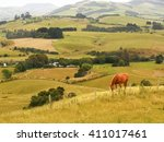 Horse In A Field In New Zealand