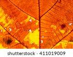 grunge autumn teak leaf texture   Shutterstock . vector #411019009