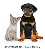 Cat And Dog Together Sits On A...