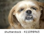 Ugly Dog With Overbite