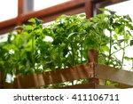 green indoors. color of life.... | Shutterstock . vector #411106711