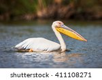 great white pelican swimming on ... | Shutterstock . vector #411108271