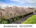 cherry blossom at japanese... | Shutterstock . vector #411152785