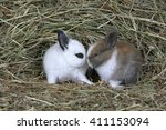 Stock photo domestic rabbits two babies together in hay 411153094