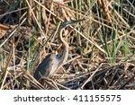 purple heron  ardea purpurea ... | Shutterstock . vector #411155575