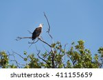 fish eagle  haliaeetus vocifer  ... | Shutterstock . vector #411155659