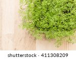 Young Dill Plant