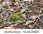 snail | Shutterstock . vector #411615685