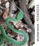 Small photo of Green pit viper, Asian pit viper,Trimeresurus, Viperidae