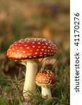 Big And Small Toadstool In The...