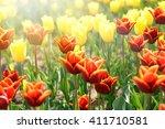 tulip. beautiful bouquet of... | Shutterstock . vector #411710581