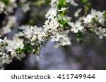 spring blossom background  ... | Shutterstock . vector #411749944