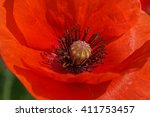close up of beautiful red poppy ... | Shutterstock . vector #411753457