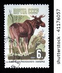 Small photo of USSR - CIRCA 1964: A stamp printed in the USSR shows Siberian moose - Alces alces cameloides, circa 1964