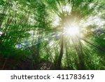reforestation for sustainable... | Shutterstock . vector #411783619