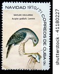 Small photo of CUBA - CIRCA 1970: A stamp printed by Cuba shows the Bird Gundlach's Hawk - Accipiter gundlachi, stamp is from the series, circa 1970