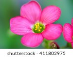 Small photo of Close up view of the beautiful pink Achimenes flower.