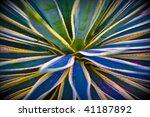 desert palm plant   Shutterstock . vector #41187892