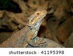 leguan | Shutterstock . vector #41195398