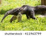 giant anteater  myrmecophaga... | Shutterstock . vector #411963799