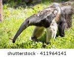 Myrmecophaga Tridactyla  Giant...