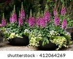 Foxglove Digitalis Flowers