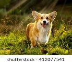 dog welsh corgi pembroke on the ... | Shutterstock . vector #412077541