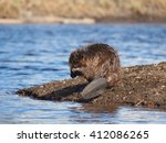 beaver on the river | Shutterstock . vector #412086265