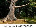 royal botanic garden  kandy  ... | Shutterstock . vector #412088389