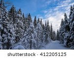 Winter Forest  Quebec  Canada
