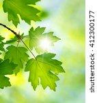 green leaves on the summer... | Shutterstock . vector #412300177