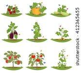 Bush Fruit Bearing Plants....