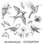 Stock vector set of of birds and flowers line drawings ink drawing hand drawn illustration vector 412369294