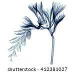 x ray image of a flower ... | Shutterstock . vector #412381027