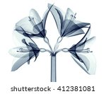 x ray image of a flower ... | Shutterstock . vector #412381081