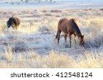 Beautiful Horses Grazing In Th...