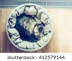 Stock photo cat sleeping curled up in basket near a window on parquet floor top view place for text retro 412579144
