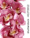 Branch Of Tiger's Violet Orchids