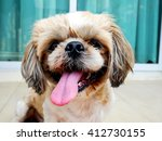 Stock photo focus dog face wait its food from owner 412730155