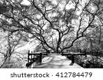 wood bridge and the mangrove... | Shutterstock . vector #412784479