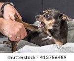 small dog aggression   Shutterstock . vector #412786489
