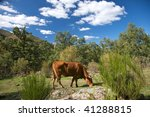 cow at gredos mountains in... | Shutterstock . vector #41288815