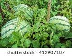 watermelons  | Shutterstock . vector #412907107