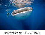 woman swimming side by side... | Shutterstock . vector #412964521