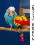 Blue Wavy Parrot Plays With A...