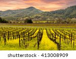 Napa Valley Vineyards  Spring ...