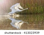 swan flutters with charming... | Shutterstock . vector #413023939