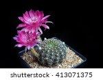 Red Beautiful Cactus Flowers...