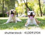Stock photo sunny dogs day 413091934