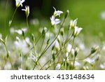 flowers in spring   Shutterstock . vector #413148634